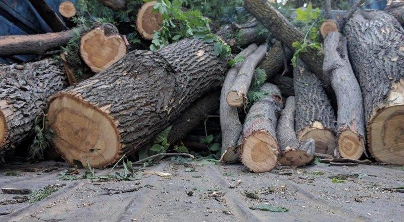 За незаконную вырубку деревьев пора ужесточить наказание.