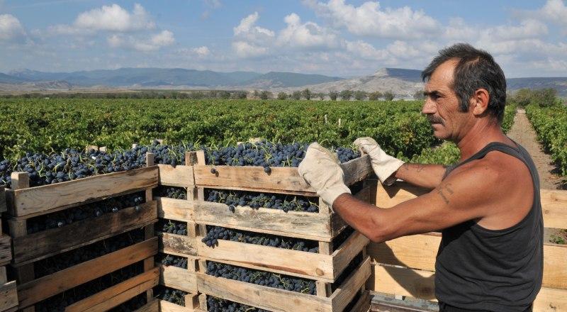 В Крыму прежде всего необходимо сажать виноградники, убеждены фермеры. Фото Александра Кадникова