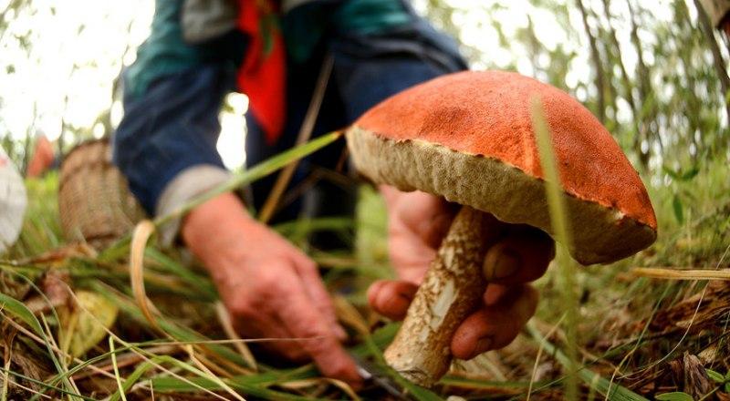 Выбирать грибы нужно с умом, иначе можно отравиться.