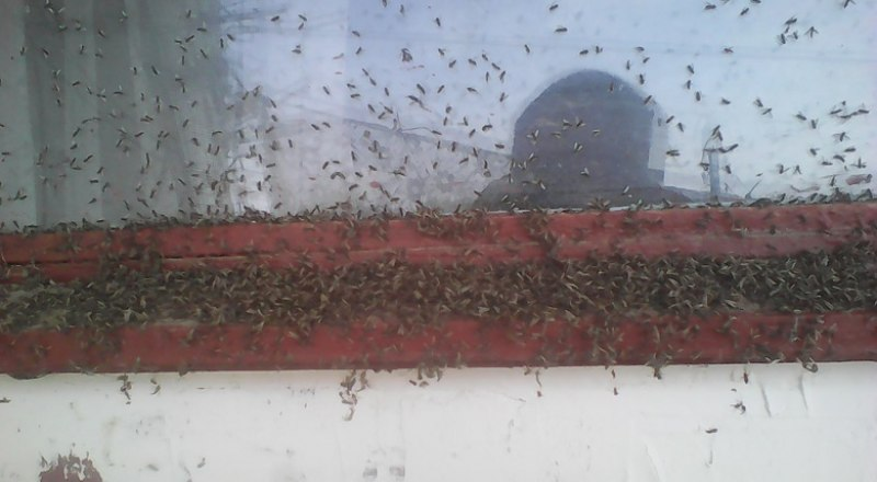 Подобное нашествие было в 2016 году. Тогда комаров убивали в огромном количестве. Фото из открытых источников.