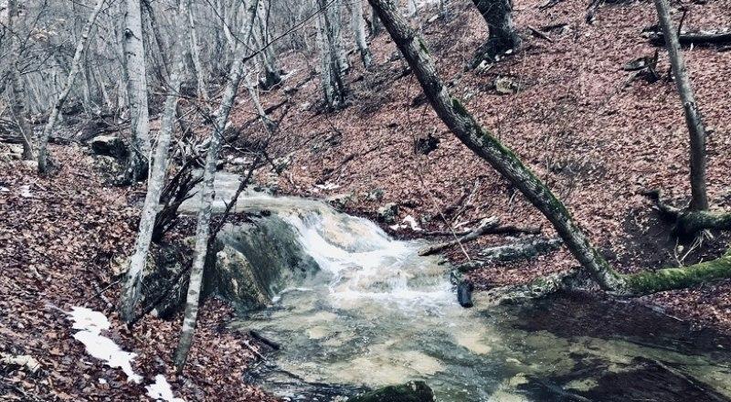 Крымские леса нуждаются в защите от нелегальных лесорубов.