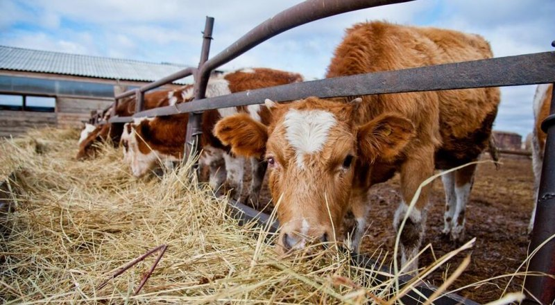 Фото пресс-службы Министерства сельского хозяйства РК.