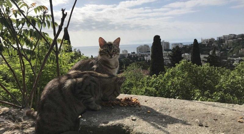 Ялтинские коты - это особое пушистое украшение города.