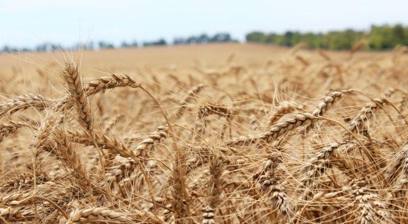 Фото пресс-службы Министерства сельского хозяйства Крыма