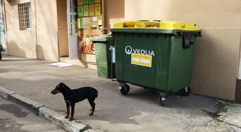 Если тариф стал больше, то и мусор должны вывозить чаще.
