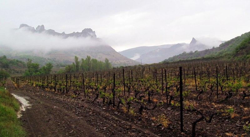 Общественность опасается, что новый собственник «Массандры» превратит виноградники предприятия в стройплощадки.