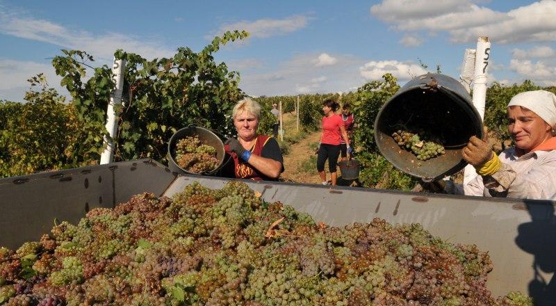 Настоящее вино - только из винограда.