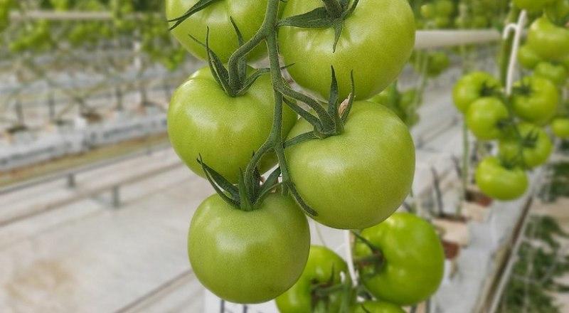 Одна из основных сфер частного инвестирования в Крыму - сельское хозяйство. В частности, овощное производство.