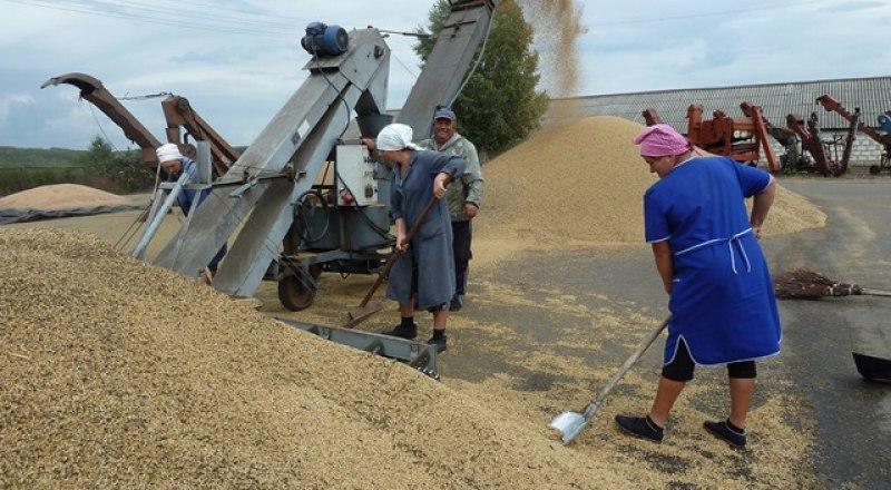 В этом году крымские аграрии намолотили всего 906 тысяч тонн зерна.