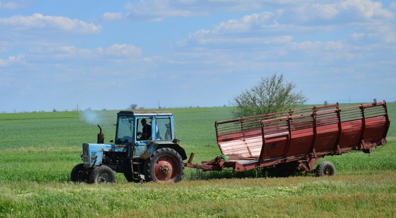 В этом году Крыму повезло: благодаря обильным осадкам, засеянные поля дадут хороший урожай.