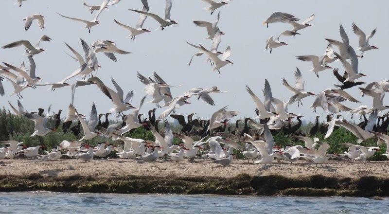 В Крыму огромное количество птиц, о которых нам нужно заботиться.