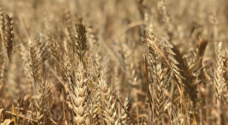 Крымчане ждут хороший урожай и после зимы. Главное, чтобы природа помогла.