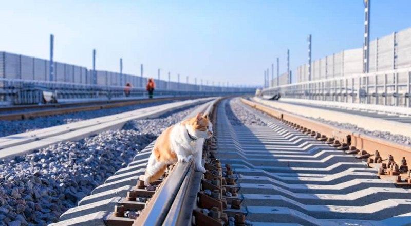 За строительством железнодорожной части моста следит знаменитый кот Мостик.