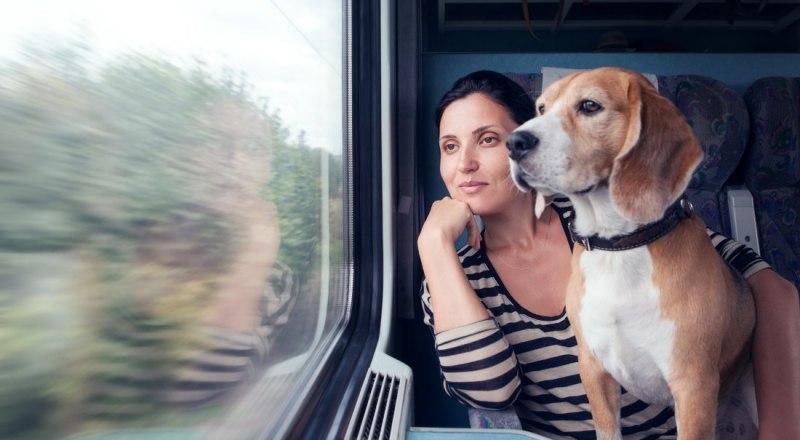 Соблюдайте все правила перевозки животных, и тогда поездка пройдёт гладко.