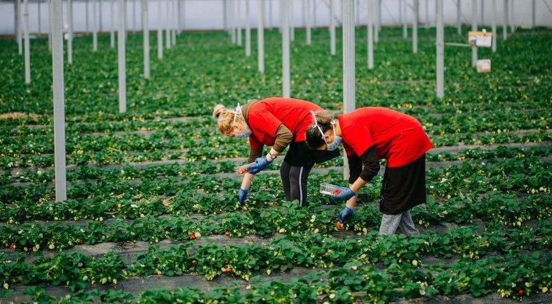 Фото пресс-служба Министерства сельского хозяйства Республики Крым