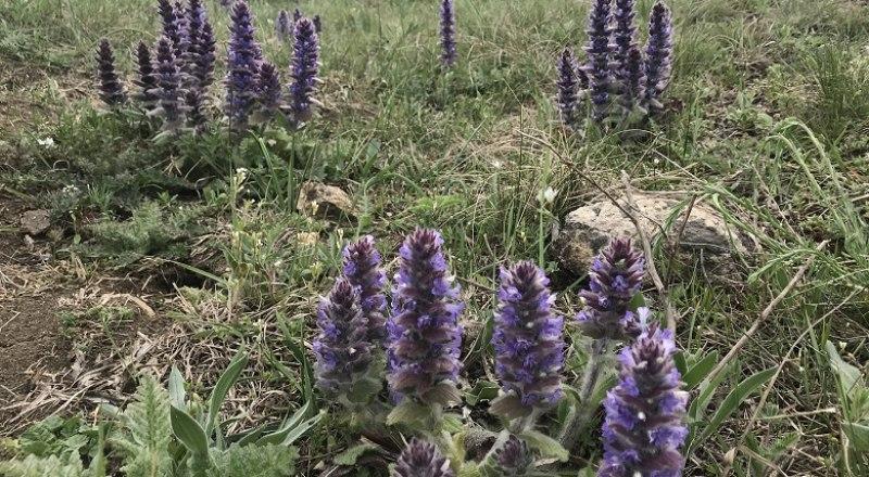 В Крыму много растений, которые нужно беречь, а не срывать. Даже для здоровья.