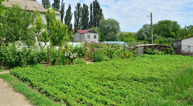 Огород - отличное место для урожая. Но не всегда урожая овощей.