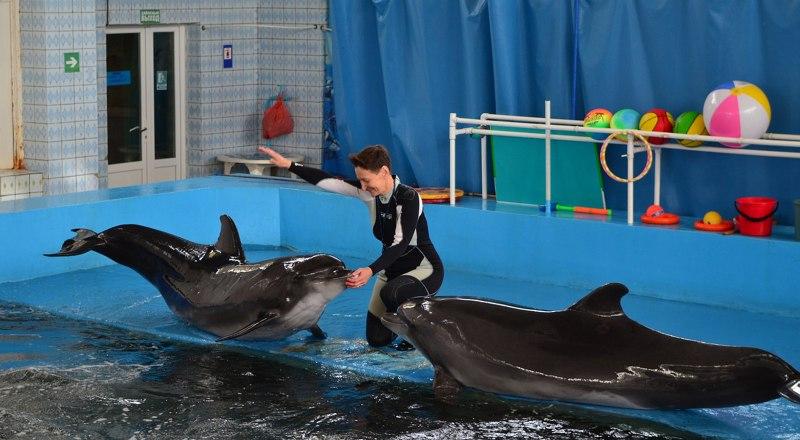 Теперь размер бассейнов и даже качество воды в дельфинариях будут контролироваться государством.