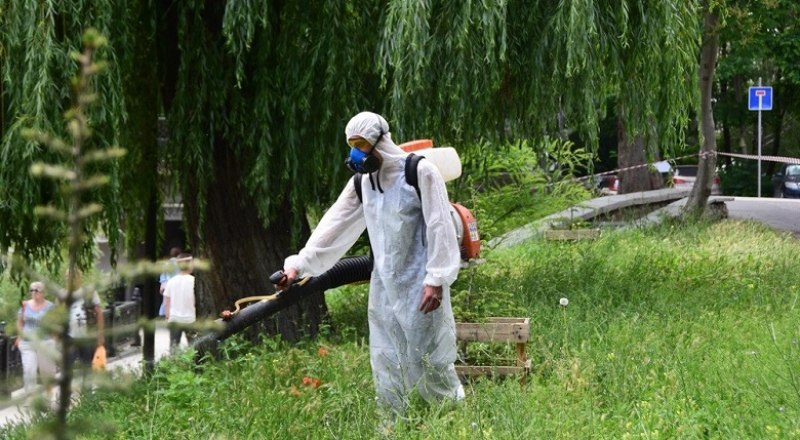 Коммунальные службы продолжают борьбу с амброзией с помощью гербицида.