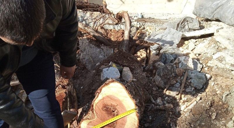 Фото: пресс-служба Министерства экологии и природных ресурсов РК